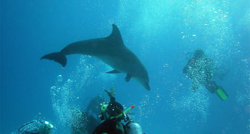 Marsa Alam Diving | Daily Diving Trips