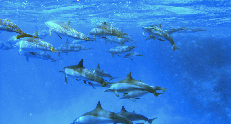 Sataya Reef | Dolphin House Marsa Alam